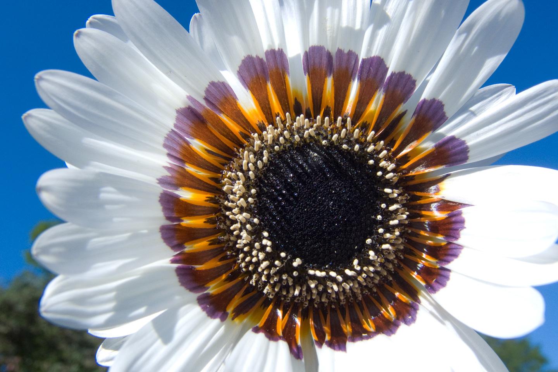Køb Blooming White av Kirsten Stigsgaard