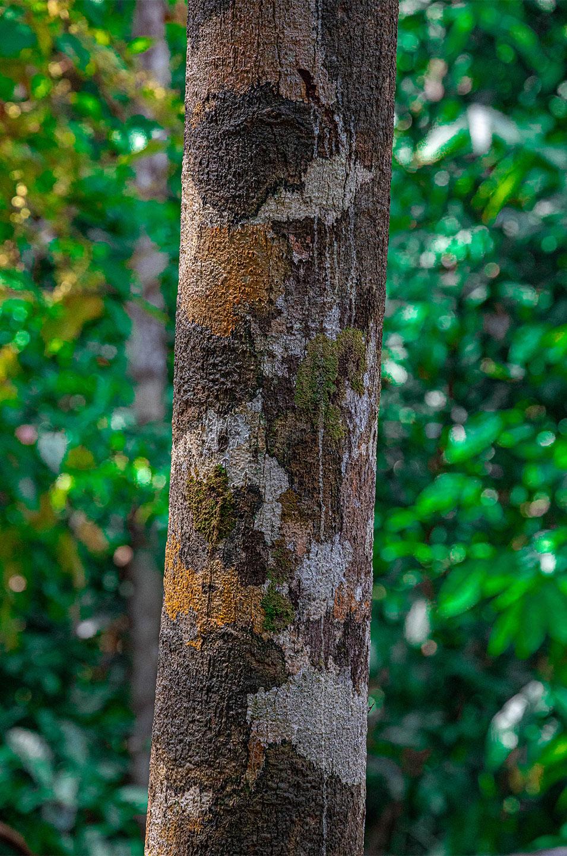 Køb Bornean tree trunk av Thomas Stubergh