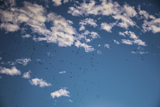 Evening Birds av Kirsten Stigsgaard