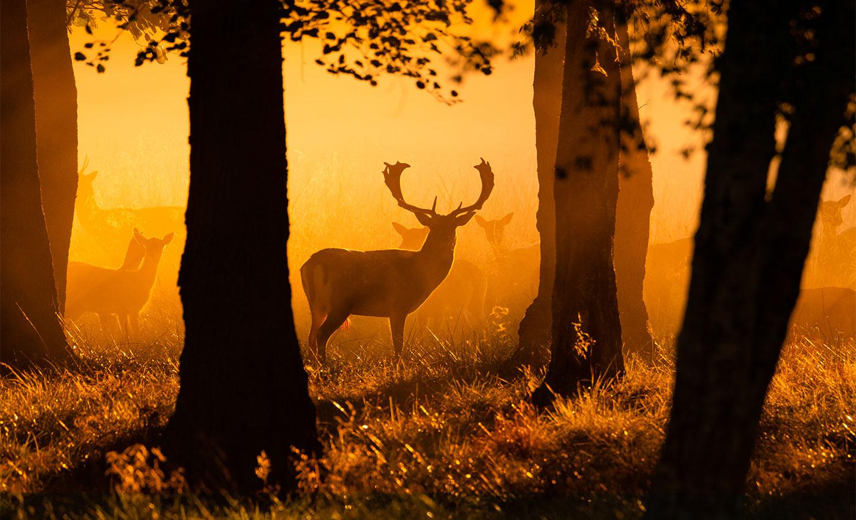 Køb Early morning rays of light av Daniel Faisst