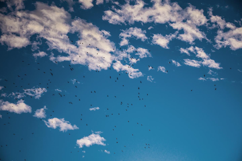 Køb Evening Birds av Kirsten Stigsgaard
