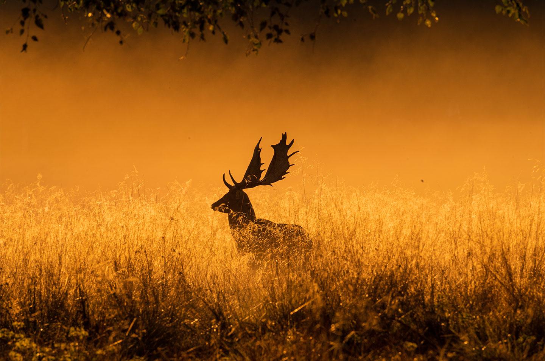 Køb Foggy morning av Daniel Faisst