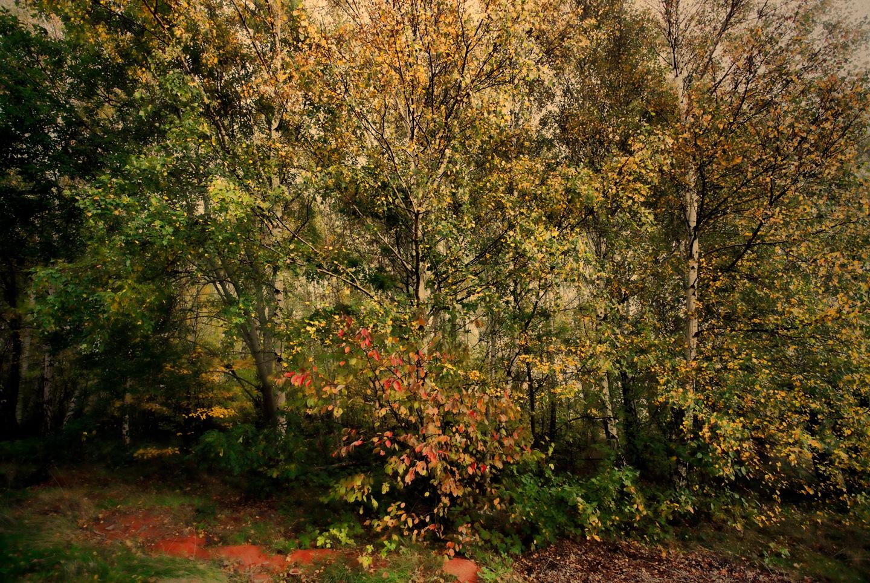Køb Forest av Gustavo Orensztajn