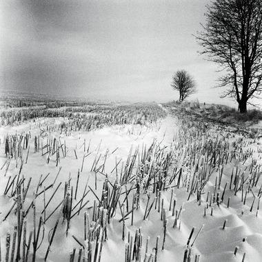 Vinter av Ida Schmidt