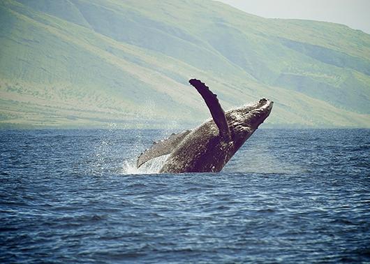 Joy of the Ocean av Pernille Westh