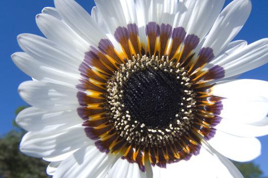 Blooming White av Kirsten Stigsgaard
