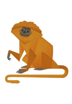 Lion Tamarin monkey av ThomasWoody