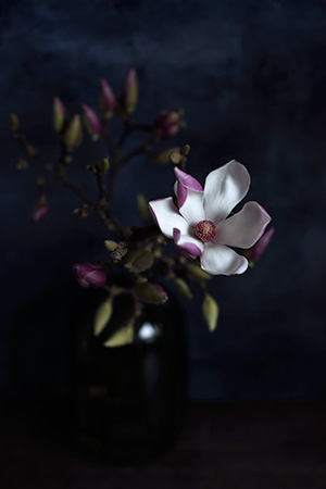 Magnolia av Diana Lovring
