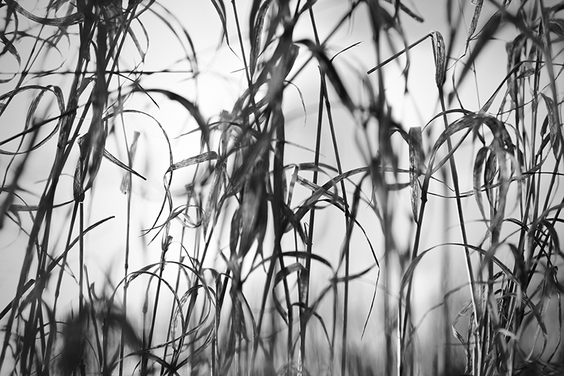 Natur3 av Preben Stentoft