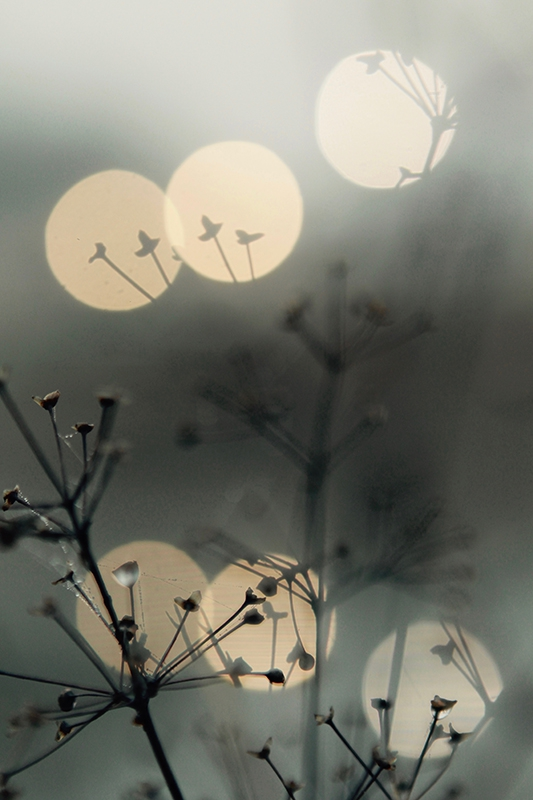 Natur5 av Preben Stentoft