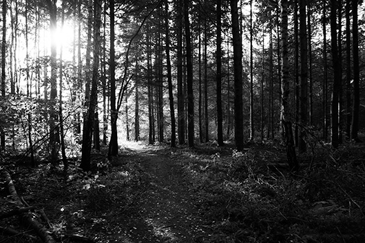 Path of light av Kirsten Stigsgaard