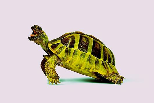 Purple Turtle av Pernille Westh